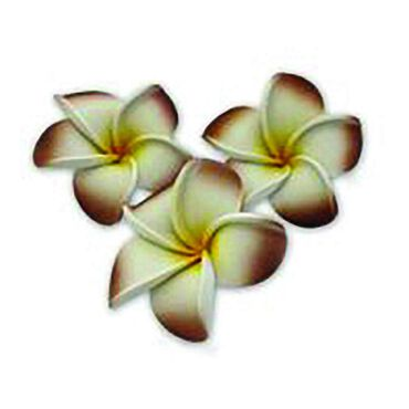 Beauty Express Floating Frangipani Brown Pack of 10